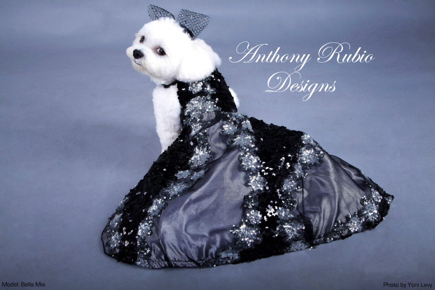 anthony-rubio-designs-couture-for-dogs-canine-copy